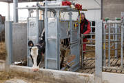 Lely - Etain, Frankrijk - Rep02 Treatmentbox(94) 9148.jpg