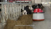 Lely Cosmix S - Testimonial Jack Nicolaes - IT.mp4